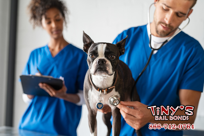 Californias Spay and Neuter Laws